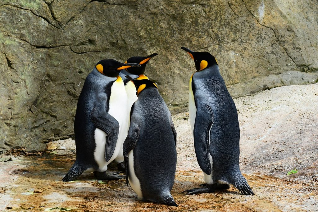 penguins talking in a group
